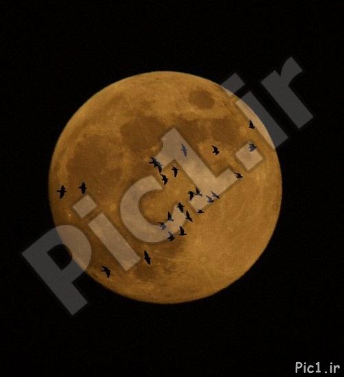 عکسی از ماه از الهه احسانی نیا