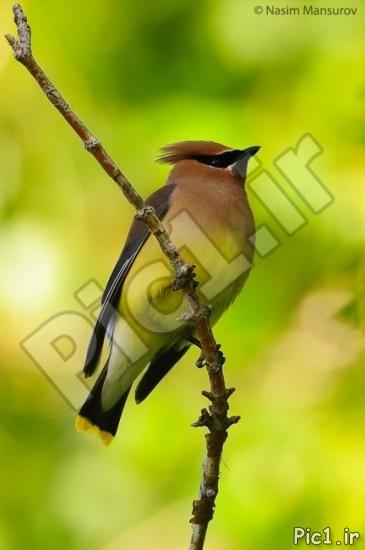 عکس پرنده زیبا