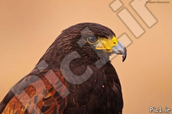 عکس عقاب 2