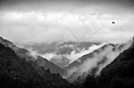 عکاس : سید آرمان نبی پور کیاروسکورو