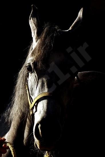 عکاس : سید شهاب الدین شهابی کیاروسکورو