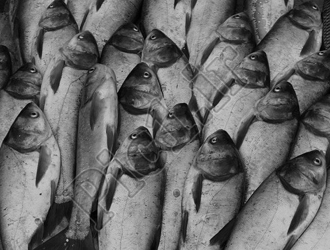 عکاس: علیرضا وجدی اصل - الگوها در عکاسی