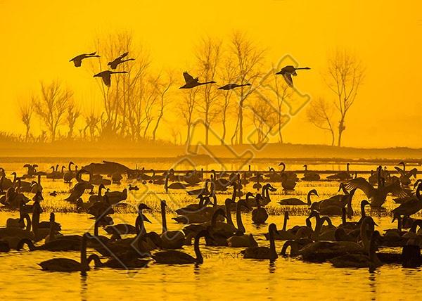 عکاس : محسن رضاپور